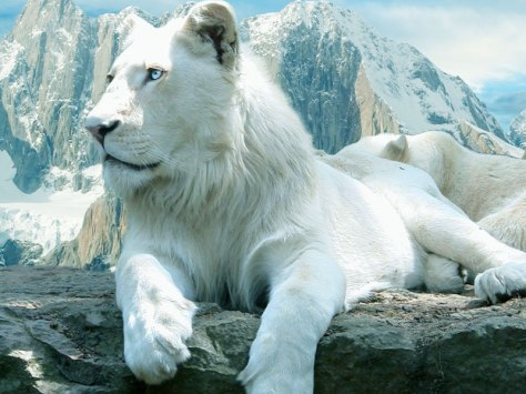 White-Lion-Wallpaper-2012